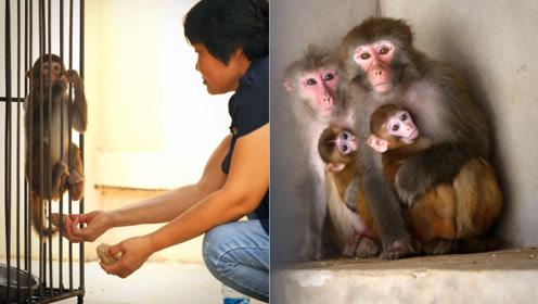 儿子要在县城买房结婚,妈妈掐指一算要花80万,赶紧养猴子挣钱