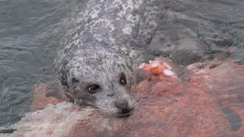 男子发现落水的狗狗,正准备下去营救,结果看一眼吓得掉头就跑
