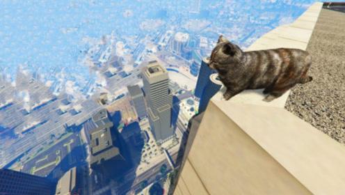 猫为什么摔不死?真是因为有9条命?镜头放慢10倍揭开真相!