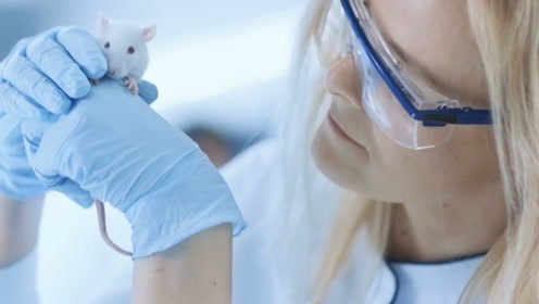 做实验为何都用小白鼠,它有什么特殊之处,内行人说出原因