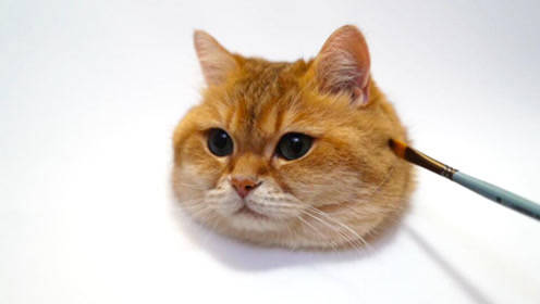如何画好一只又萌又漂亮又完美的猫咪?技巧很重要