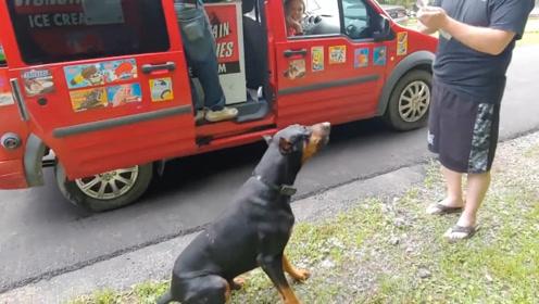 杜宾犬每天准时跑出去,主人觉得好奇,跟上去发现了狗狗的秘密