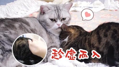 流浪猫被救助后抗拒与人类亲近,两年后终于接受主人抚摸,好软萌