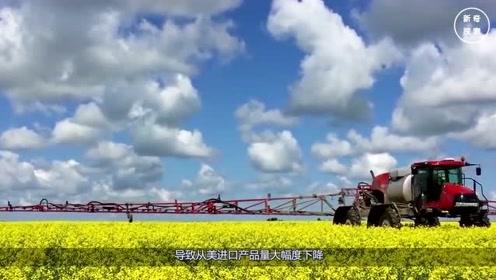 百万吨大豆到中国,灭国628个农场破产,外媒:不知道巨头在哪