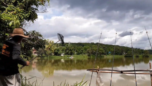 鱼塘边刚撒下几根钓竿那边钓竿就被拉动,结果钓上一条金黄大鲤鱼