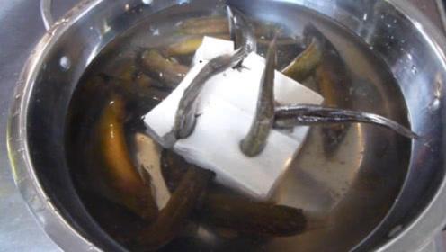 泥鳅钻豆腐究竟是真是假?老师傅现场演示,原来只是没掌握诀窍!