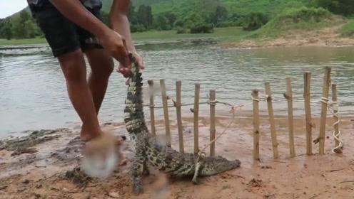 一男子自制木制陷阱抓捕鳄鱼,却被网友纷纷谴责:残忍