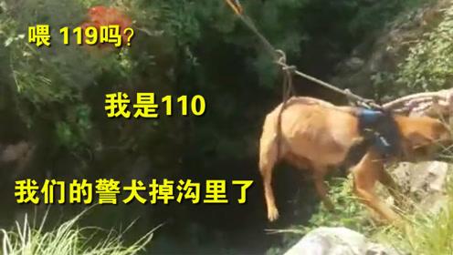 喂119吗?我是110 警犬拉练不慎掉10多米深山洞