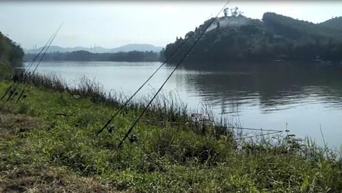 大叔到水库边放下几根钓竿,第一竿被拉动就收获一条大鲤鱼