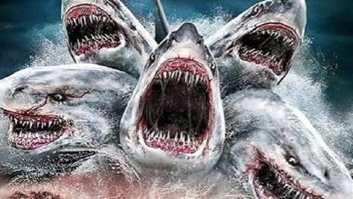 一条鲨鱼竟然有五个头,而且还能吃飞机?网友:厉害了我的鱼!
