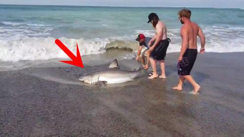 男子海边钓到100多斤的大鱼,仔细一看不敢靠近!