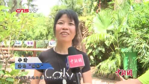 """大熊猫""""贡贡""""和""""舜舜""""迎6岁""""成年礼""""尝6层果汁冰蛋糕"""