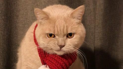 宠物百科:猫为什么摔不死?