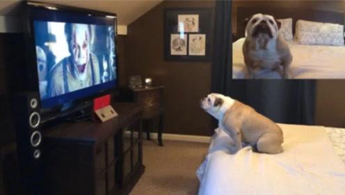 狗狗看鬼片都是什么反应?看完笑得停不下来