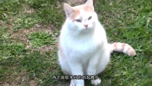 """我们会用""""馋猫""""形容别人,那么猫咪到底有多馋呢?"""