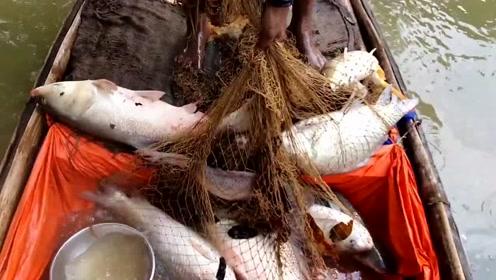 农村小伙撒网捕鱼,几网下去小船都快装不下了,真让人羡慕