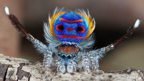3种世界上最罕见的动物,你可能一种都没见过,大自然太神奇!