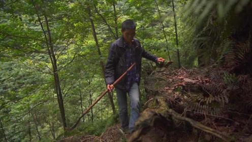 从少年到白发!护林员巡山30年,日走10余公里,靠唱歌解闷