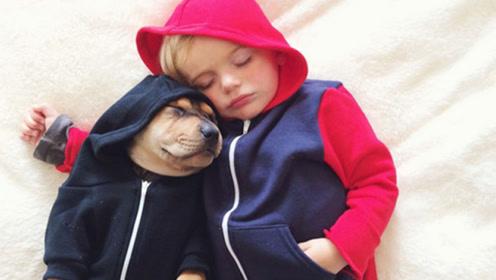 当萌娃遇到狗狗,场面不要太欢乐!