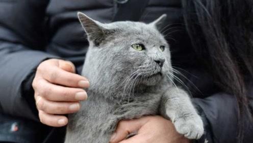 主人给猫咪放音乐,猫咪的反应笑趴下,猫咪:听我的嗨起来