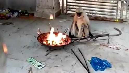 只知道钻木取火,还不知道猴子也会