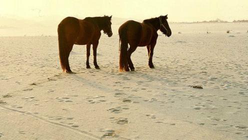 湖南最值钱的沙漠,每一粒砂都是财富,日本想买下它被拒!