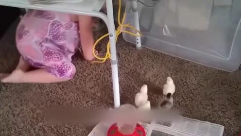 看看那些小动物是怎么被宝宝欺负的,想跑跑不掉,太有趣了!
