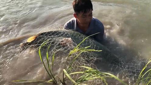 撒网突然拉不动,发现不对劲,赶紧跳下水抓鱼