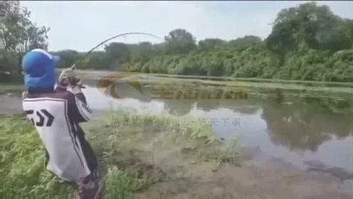 男子刚钓出大鱼下一秒却引来鳄鱼抢食 场面变得混乱