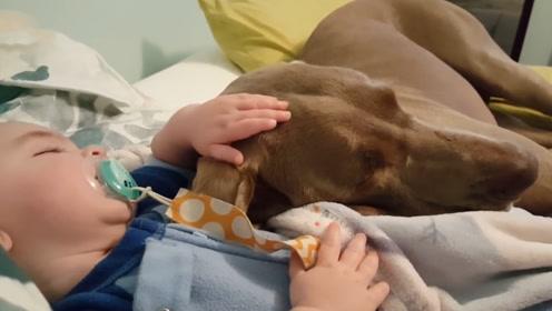宠物狗咬伤怎么办 有宠物的父母须知道
