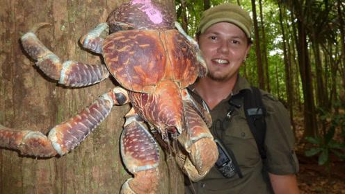 地球上体型最大的甲壳类动物Top5,它们一个个都出乎你的意料