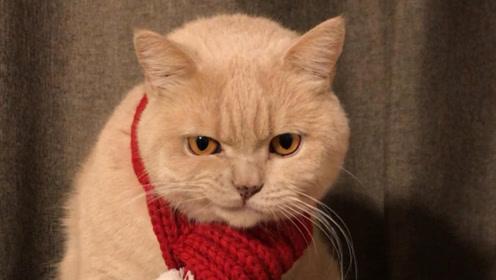 高贵而有趣的灵魂!沙雕猫猫的日常!就是这么喜欢与生活作对!