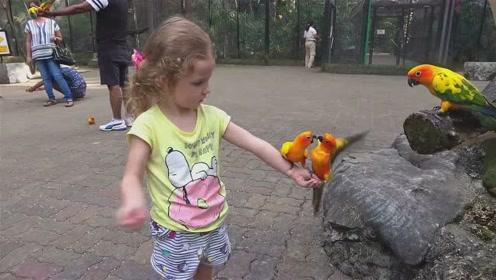 萌娃在动物园和小动物们一起玩的可开心了!萌娃:鹦鹉好可爱呀!