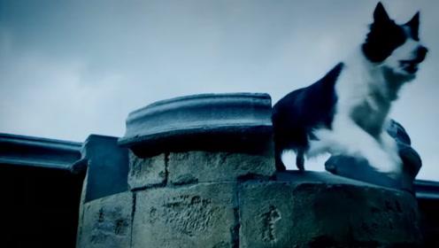"""英国""""鬼桥"""",600多只狗狗跳桥自杀,专家终于找到真凶"""
