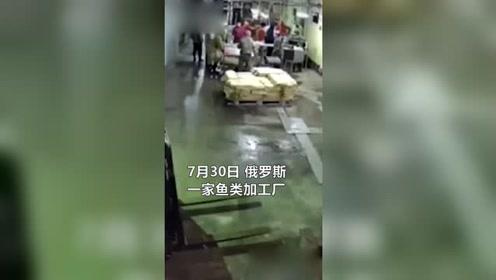 熊熊无意闯进工厂后转身就跑,工人们后知后觉蒙圈了