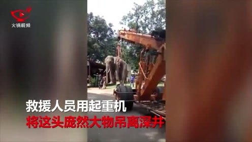 印度一大象掉入深井,人们出动起重机展开救援