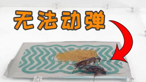 蟑螂一碰就无法逃脱,还有这样的东西?