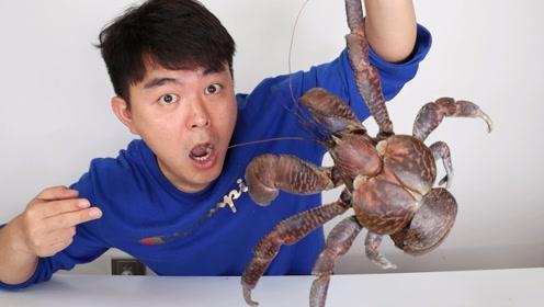 """试吃800一斤""""椰子蟹"""",打开之后竟有满满一大袋黄!"""
