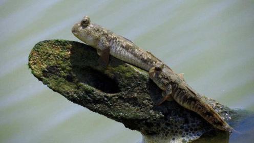"""男子树林发现""""鱼爬树"""",鱼鳍当腿用,速度竟然贼快"""