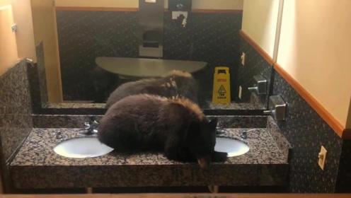 现场!酒店女厕惊现一头小黑熊 趴洗手台不肯走引住客拍照围观