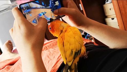 鹦鹉自学成才,竟然学会了怎么玩儿QQ飞车,还会漂移和氮气加速
