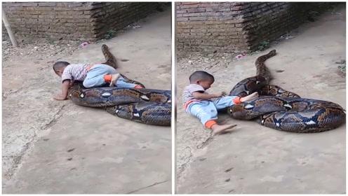 3岁男孩跟蟒蛇玩耍,接下来的画面,网友看愣了