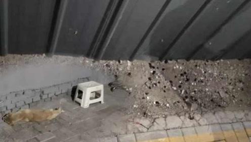疑遭投毒小区20猫狗死亡,居民:伤心