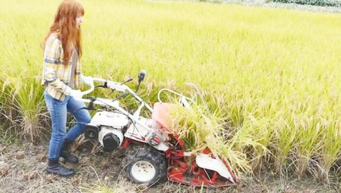 日本大学生发明水稻收割机,收割捆扎一次就成型,一天收割15亩