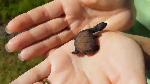 """大叔在野外捡到一只乌龟,养了一个月后,没想到变成这个""""东西"""""""