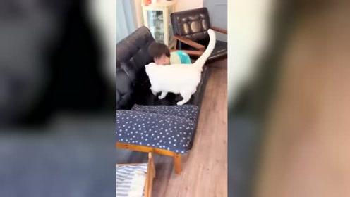 家里孩子一摔倒 白猫就会马上过去