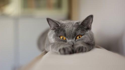 猫咪为什么能轻而易举跳上几米高的围墙,慢镜头告诉你原因
