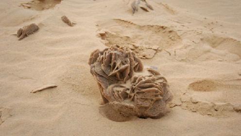 """知情人士透露,在沙漠遇到""""石头""""一定要捡起来,不捡肠子都悔青"""