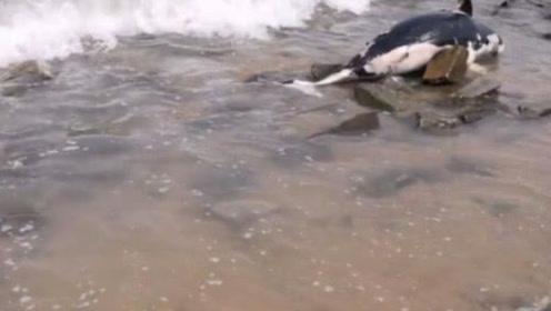 男子江边钓鱼,发现一米多长黑色物体,近看竟是条大鱼