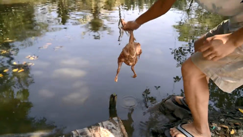 男子提了只鸡,放进全是鲶鱼的池塘,水面瞬间沸腾太壮观了!